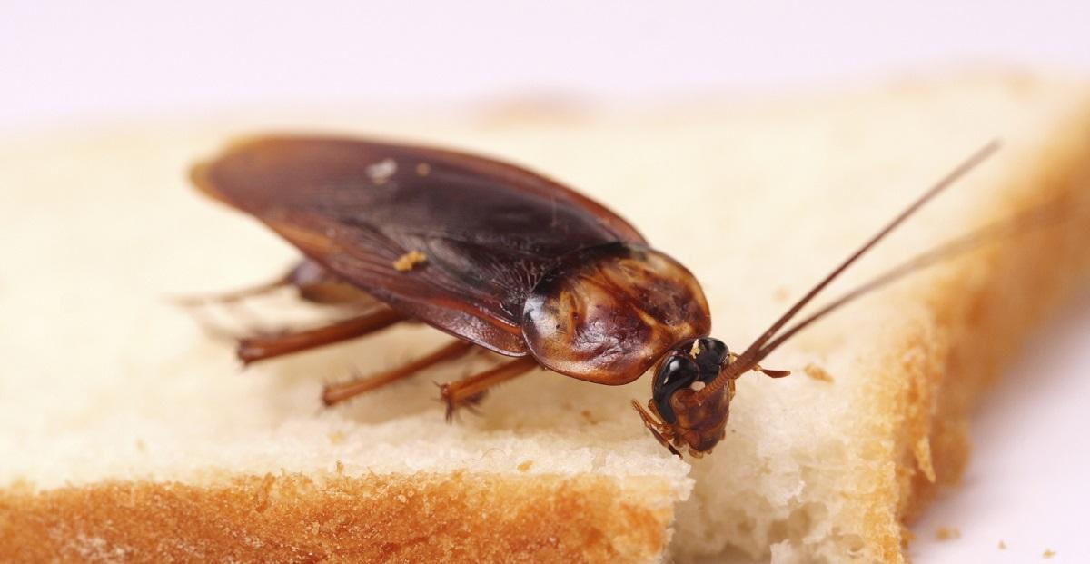Las cucarachas en verano