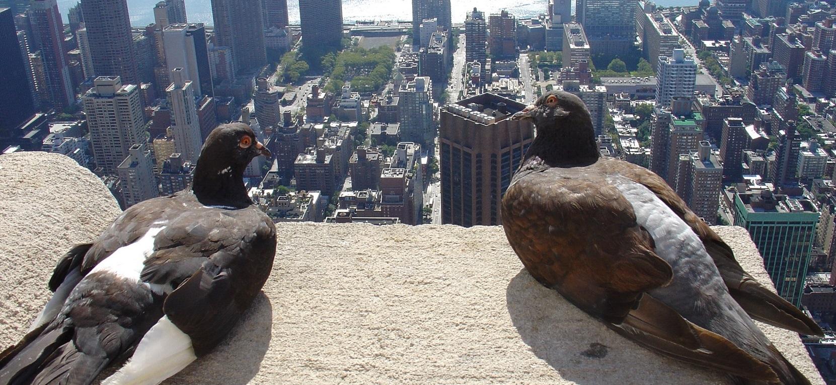 palomas-fondo
